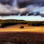 Foto de un prado de Menorca