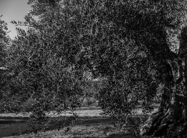 Paisajes de la Toscana