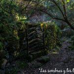Poema Las sombras y los llantos