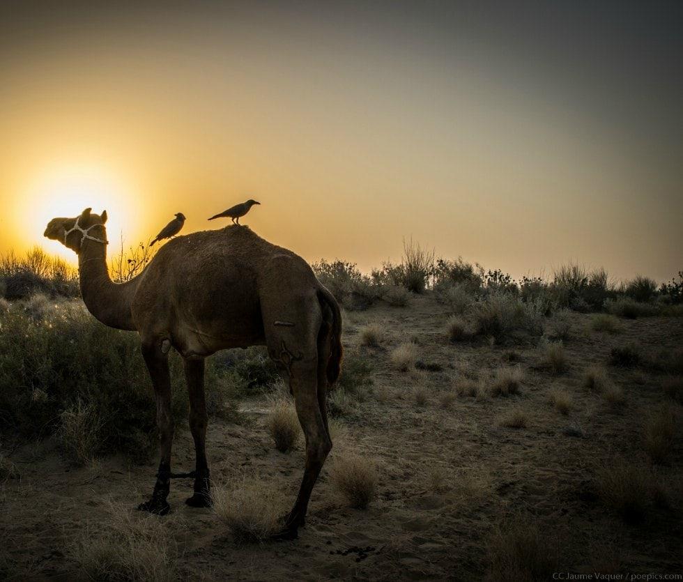 Fotografias de la India - Desierto de Jaisalmer