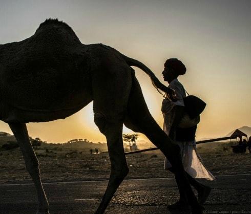 Feria camellos Pushkar, Rajasthan, India