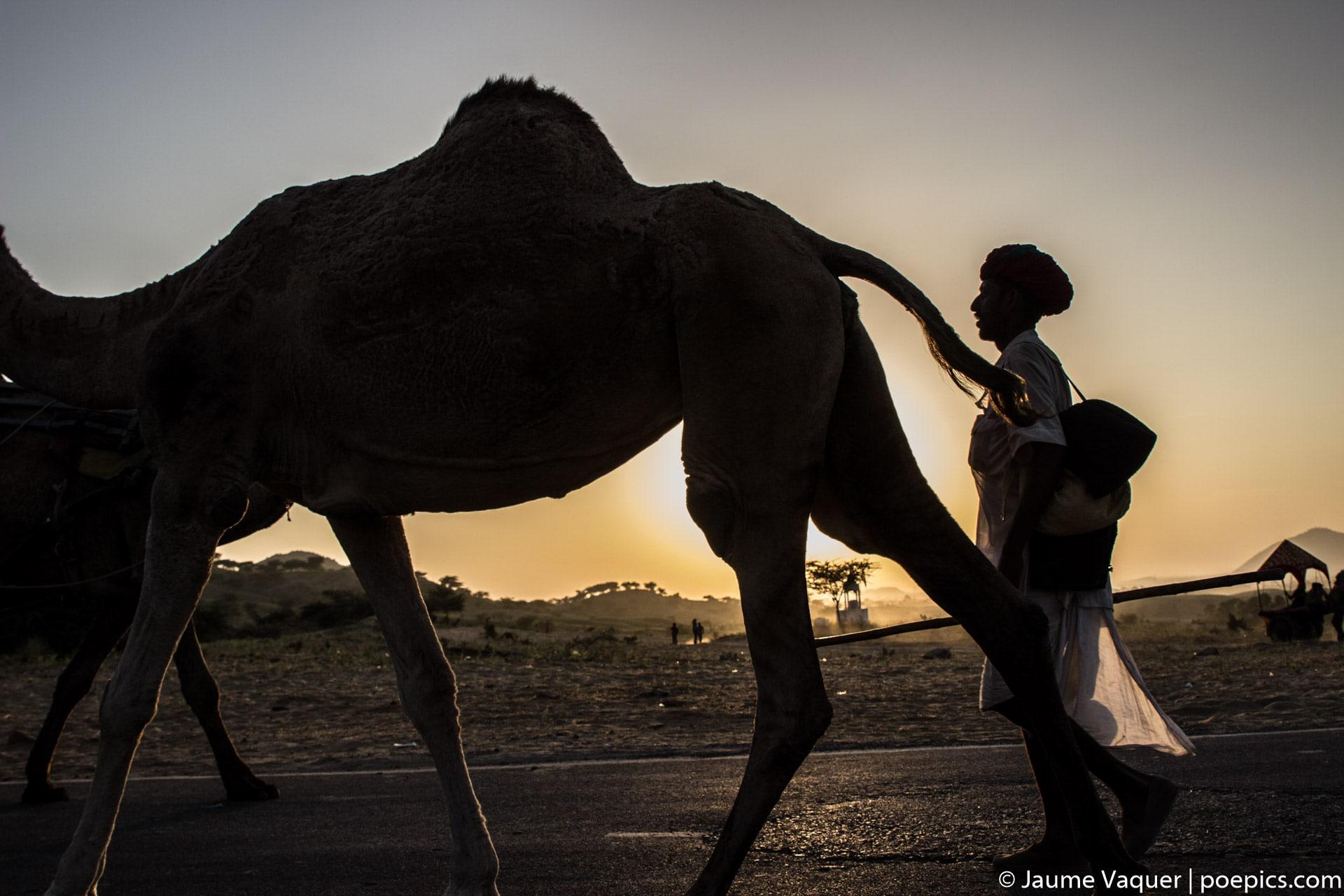 Feria de camellos de Pushkar, Rajasthan, India