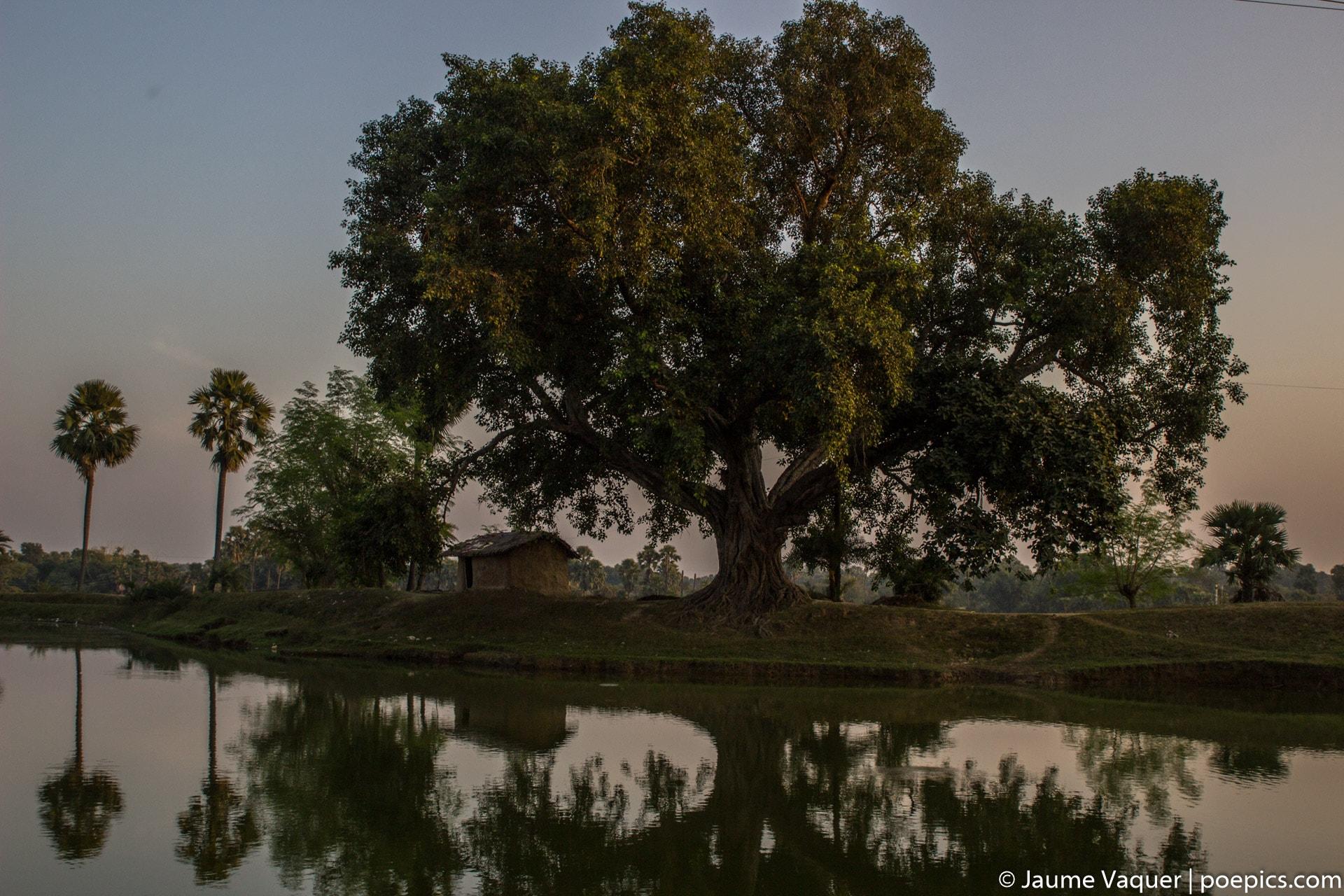 Fotos de la India, Arbol de Bodhgaya