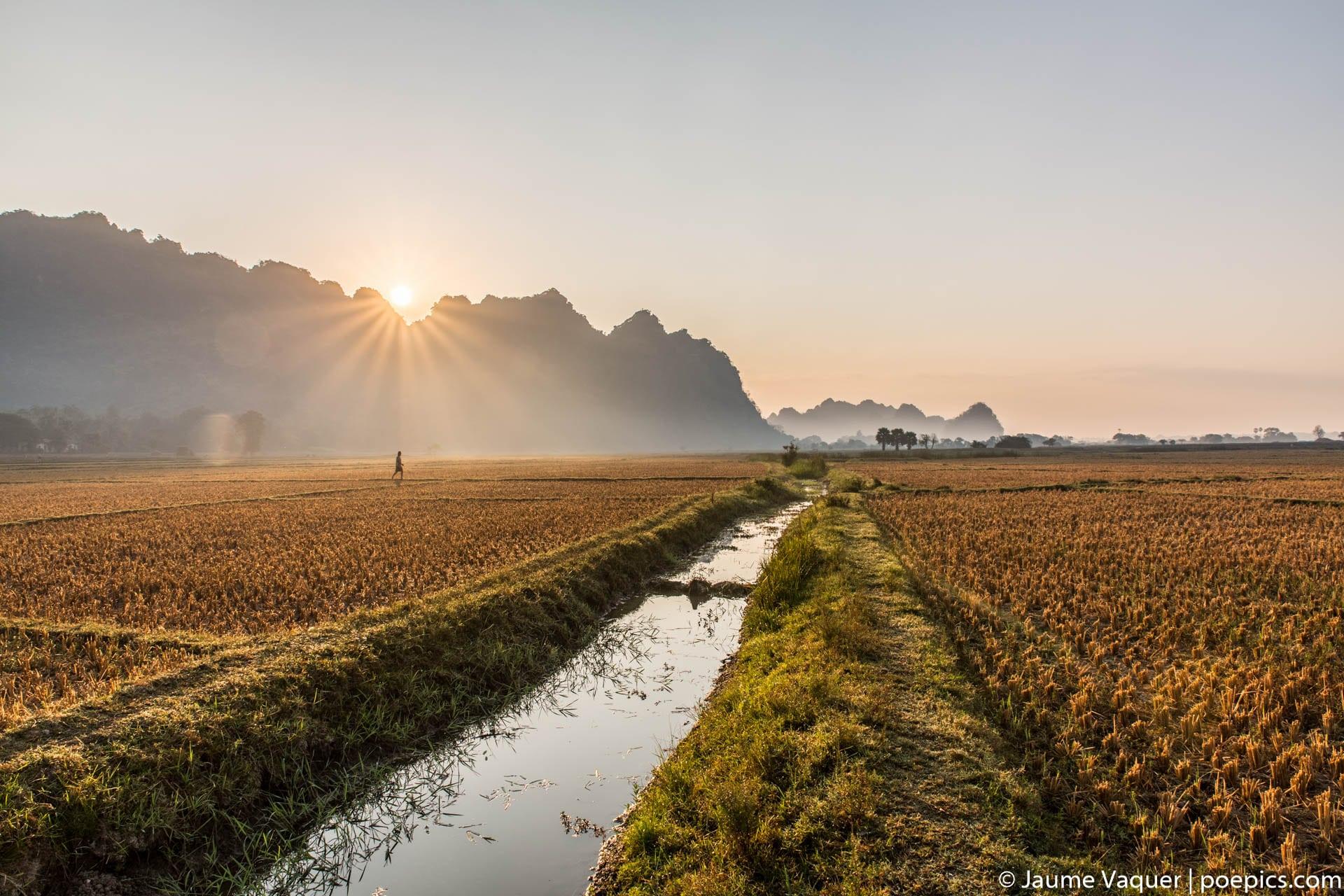 Sunrise in a rice field of Hpa-An, Myanmar (Burma)